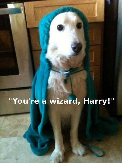 My Dog, the Wizard