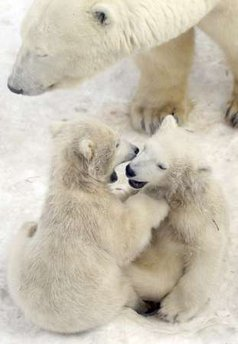 How lists make me feel: like a baby polar bear.