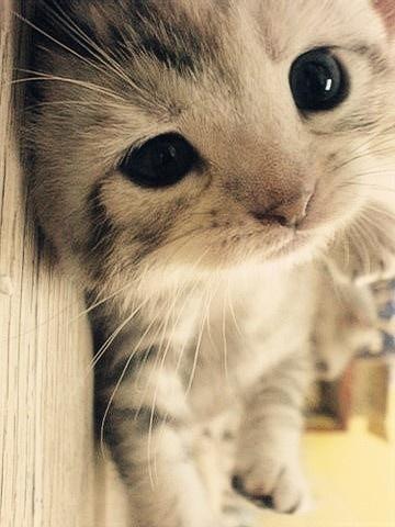Unrelated: kitten.